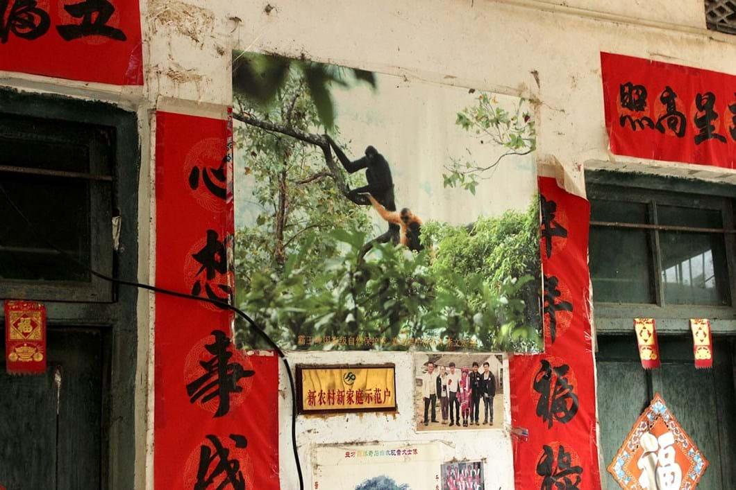 photo-hainan-gibbons_2020-11-11.jpg