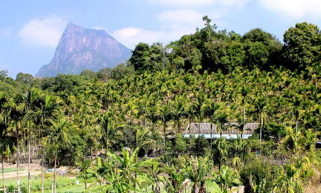 palm_plantation_2020-11-11.jpg