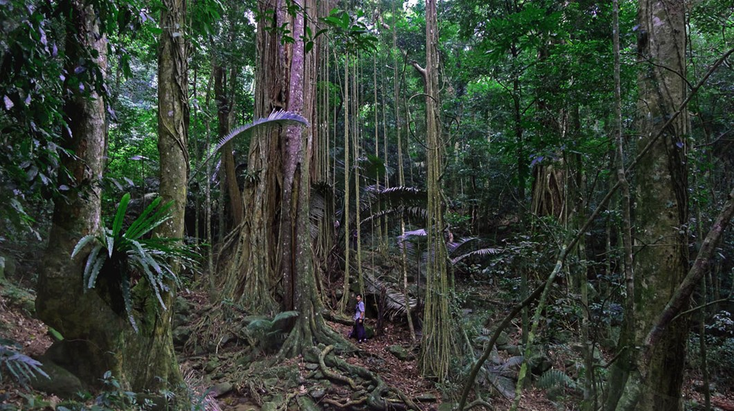 Hainan-Bawangling-National-Nature-Reserve-forest_2020-11-11.jpg