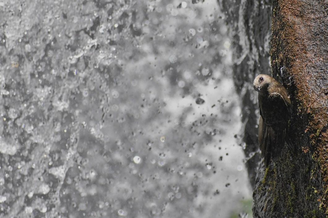 Waterfall-swift-Pablo-Javier-Merlo_2020-11-27.jpg