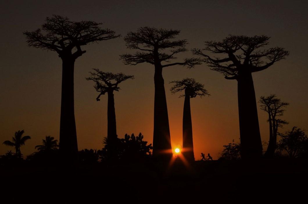baobab-Elena-Racevska_2020-11-27.jpg