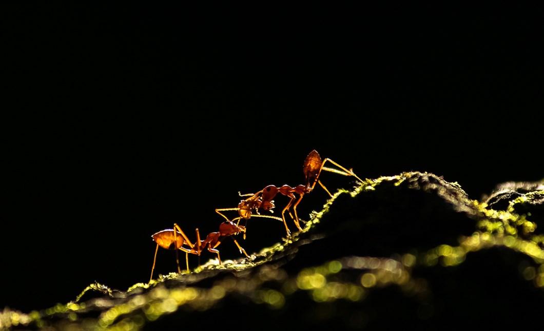 Ant-tale-Upamanyu-Chakraborty_2020-11-27.jpg