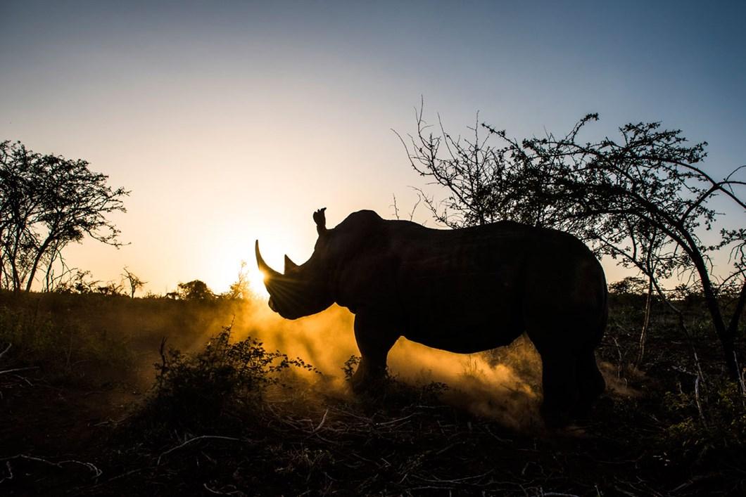 rhino-phinda_2020-11-29.jpg