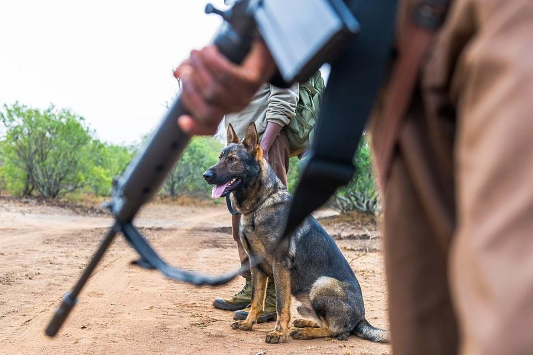 anti-poaching-dog_2020-11-29.jpg