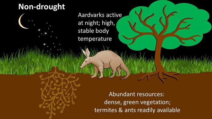aardvark-diagram_2020-12-02.jpg