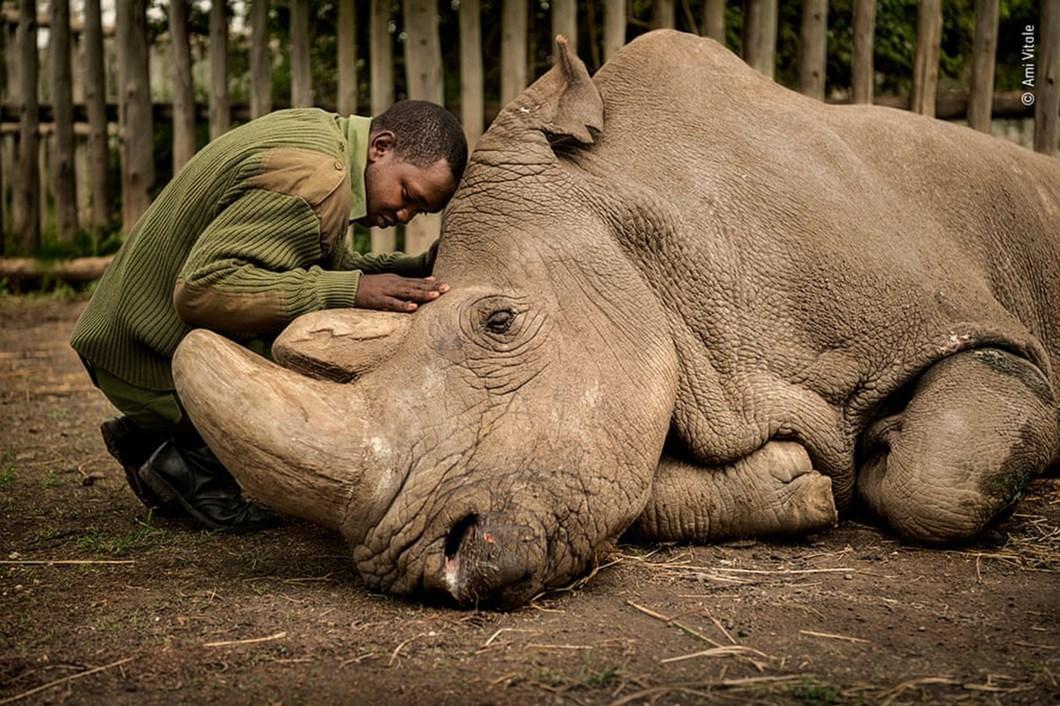 sudan-northern-white-rhino_2020-12-03.jpg