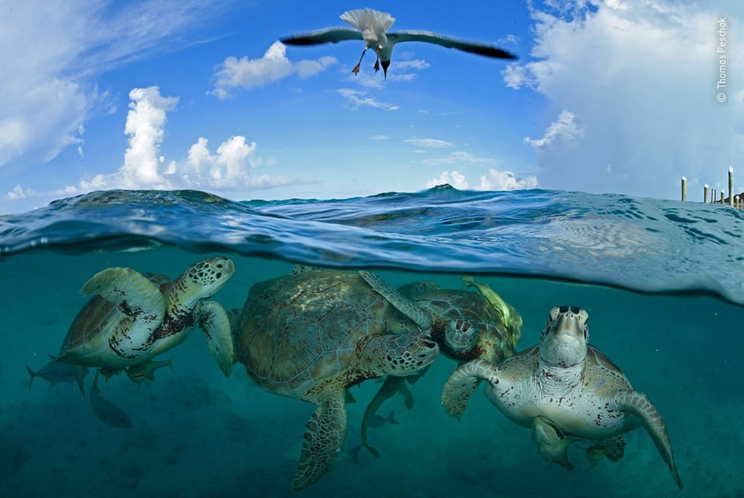 sea-turtles_2020-12-03.jpg