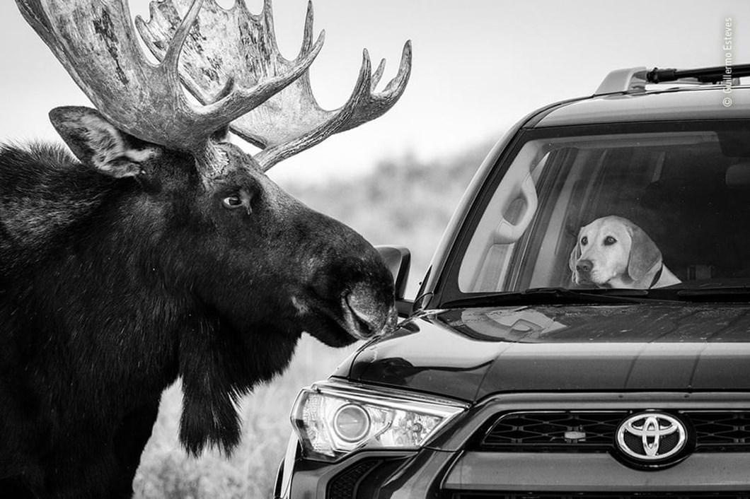 moose-dog_2020-12-03.jpg