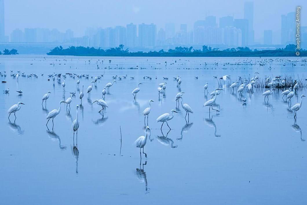 egrets_2020-12-03.jpg