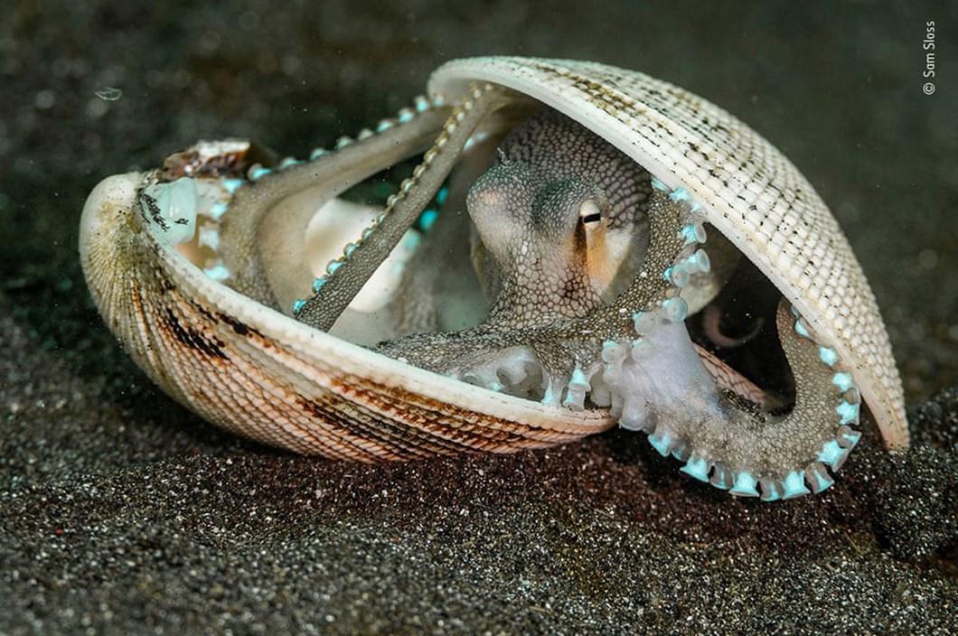 coconut-octopus_2020-12-03.jpg