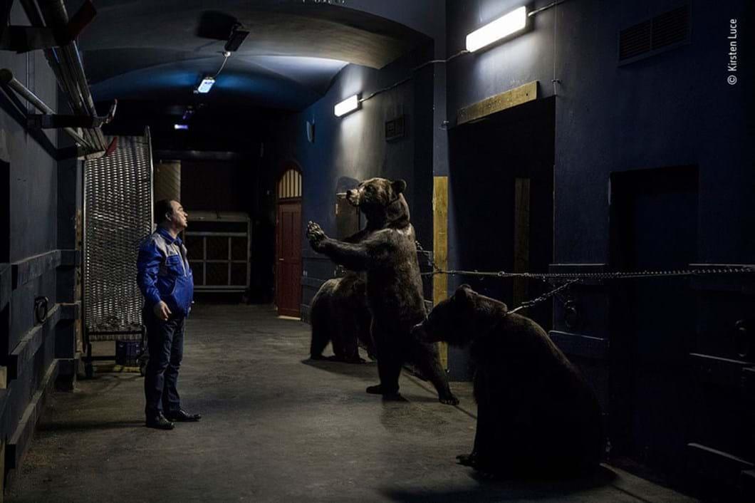 circus-bear_2020-12-03.jpg