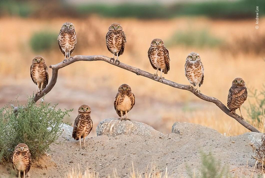 burrowing-owls_2020-12-03.jpg