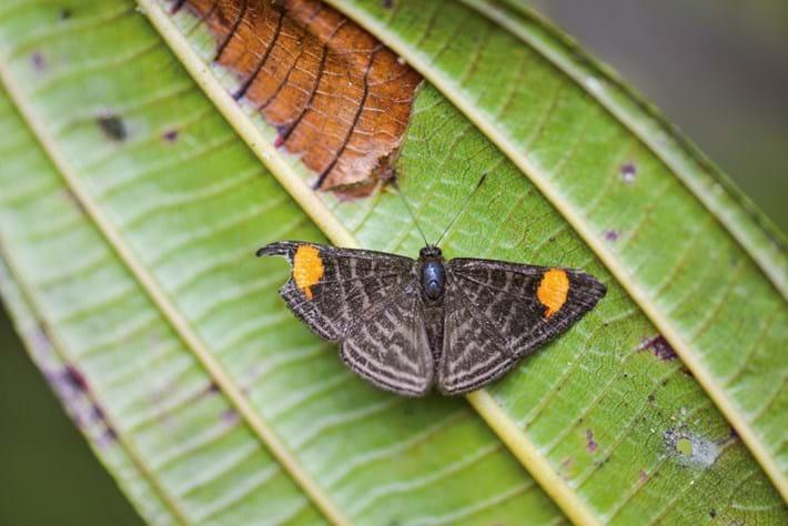 butterfly_2020-12-16.jpg