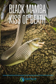 Black Mamba – Kiss of Death
