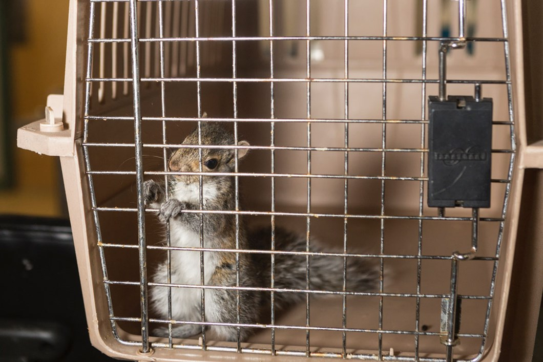 squirrel-cage-wildlife-rehab_2020-01-13.jpg