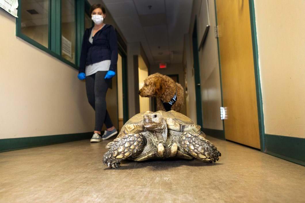 tortoise-dog-wildlife-rehab_2020-01-13.jpg