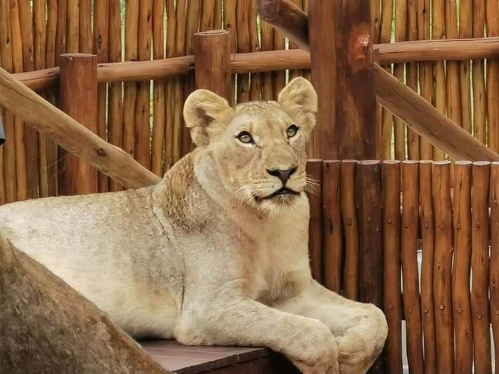 lions-on-patio-3_2021-01-14.jpg