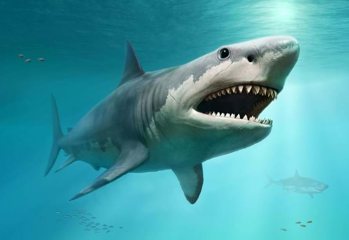 megalodon-shark-illustration_2021-01-15.jpg