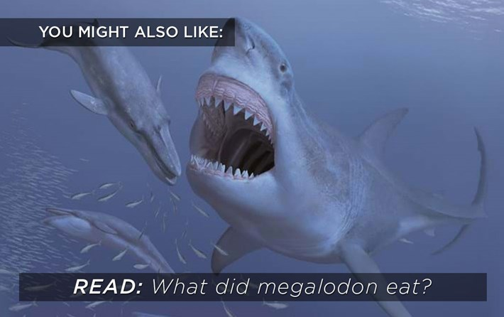 megalodon-diet_related_content_2021-01-15.jpg