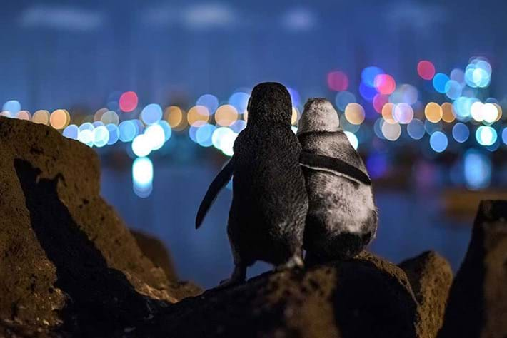 These cuddling penguins are the perfect mascots for Penguin Awareness Day