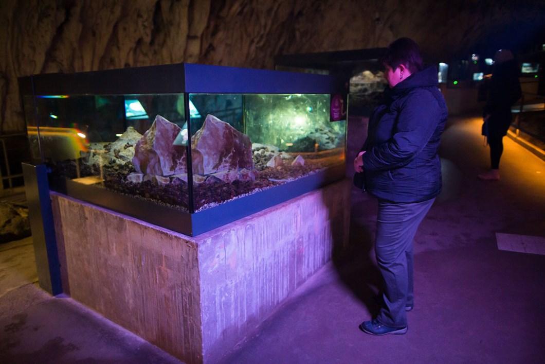 Postojna-Cave-Park-exhibit_2021-01-26.jpg