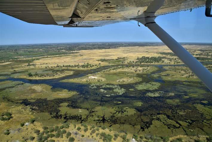 Okavango-delta_2021-02-19.jpg