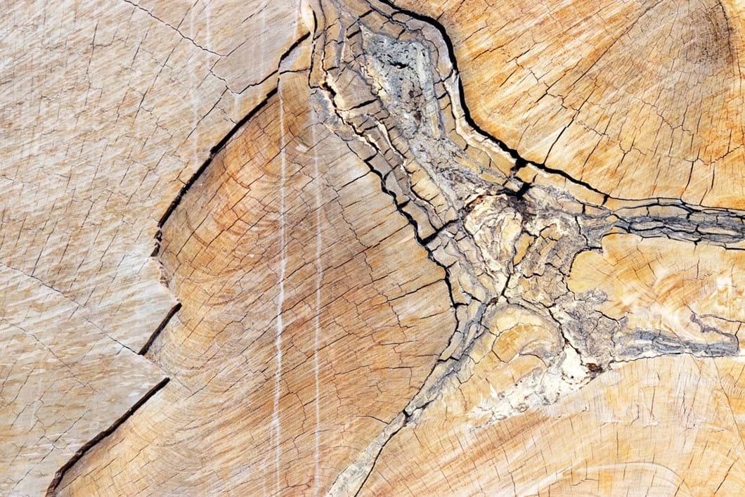 42000-year-old-kauri-log-_2021-02-23.jpg