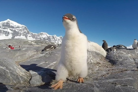 Watch: These adorable penguins are just what you need to kickstart your weekend