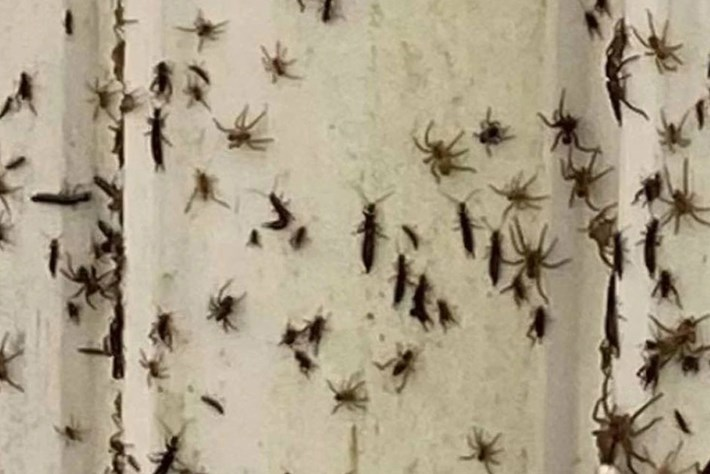Thousands of spiders filmed fleeing floodwaters in southeastern Australia