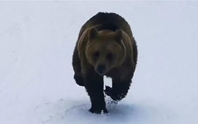 Skier captures heart-racing footage of a bear pursuing him down the slopes