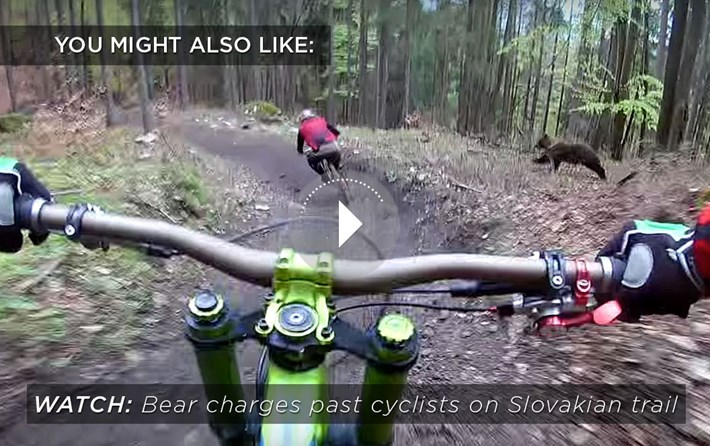 bear-cyclists_related_content_2021-04-08.jpg