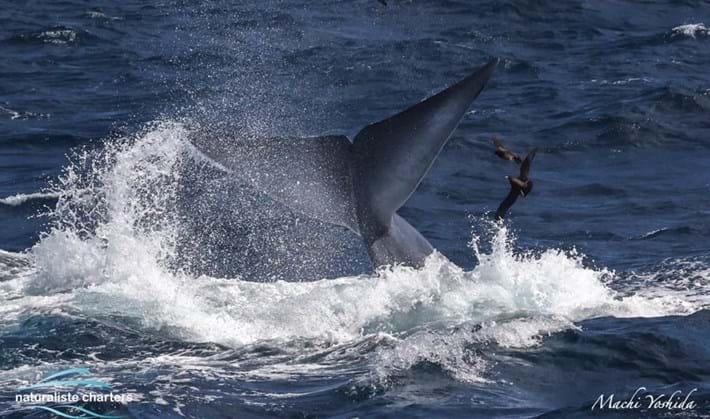 blue-whale-orcas-bremer-bay_1_2021-04-13.jpg