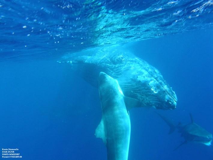 shark-humpback_2021-04-30.jpg