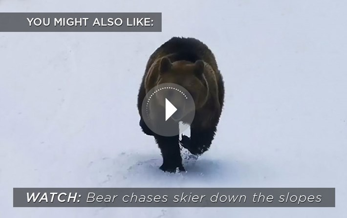 bear-skier_related_content_2021-05-04.jpg