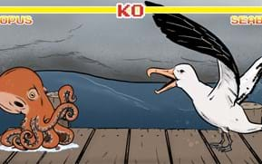 Who would win in a fight between an octopus and a seabird?