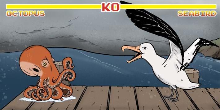 octopus-vs-seabird_2021-05-12.jpg