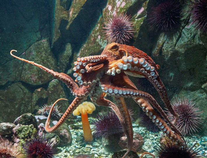 Octopus_2021-05-12.jpg