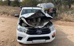 Close call: Elephant crumples car hood in hair-raising charge