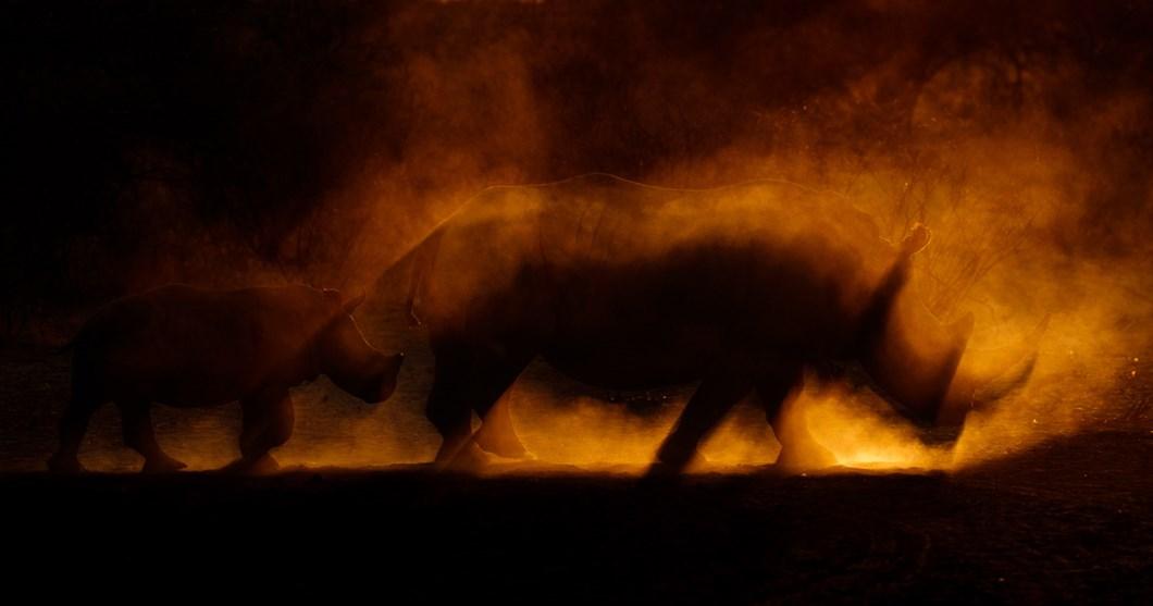 James-Gifford-rhino_2021-06-05.jpg