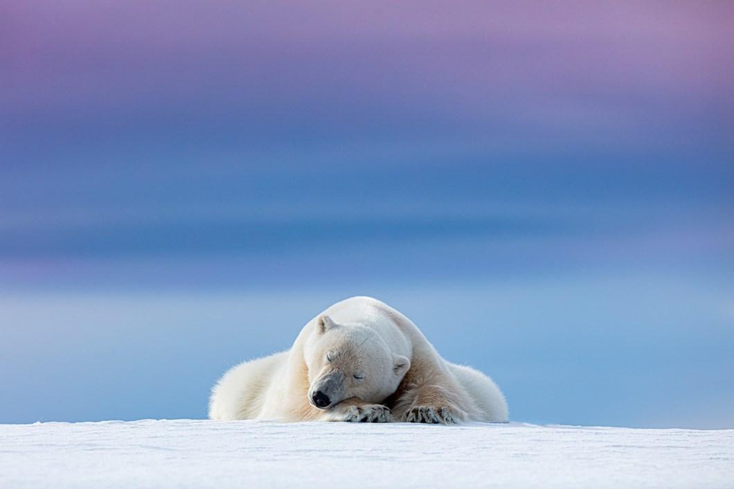 Dennis-Stogsdill-polar-bear_2021-06-05.jpg