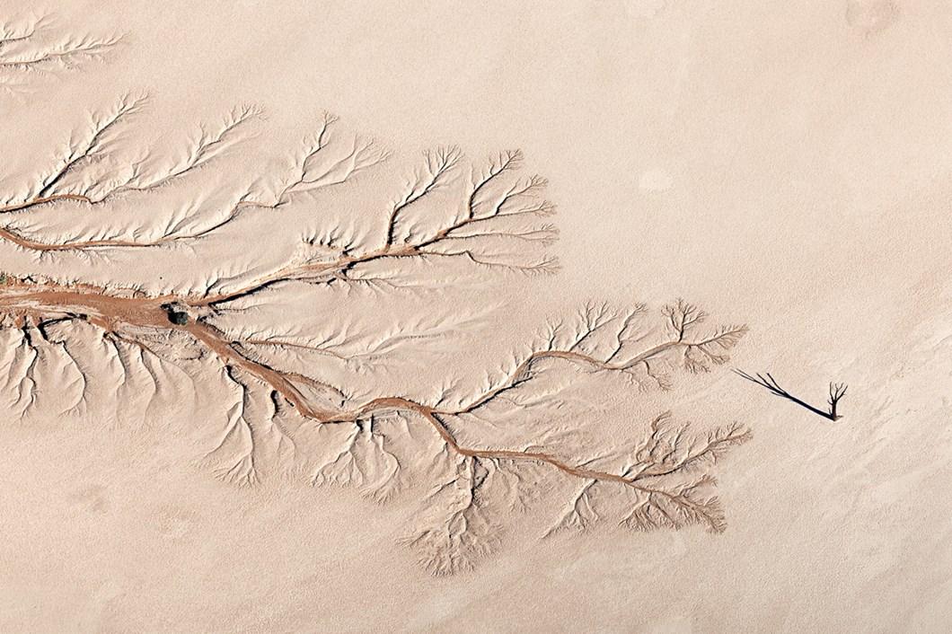 Jay-Roode-camel-thorn-Tsauchab-RiverTsauchab-River_2021-06-05.jpg