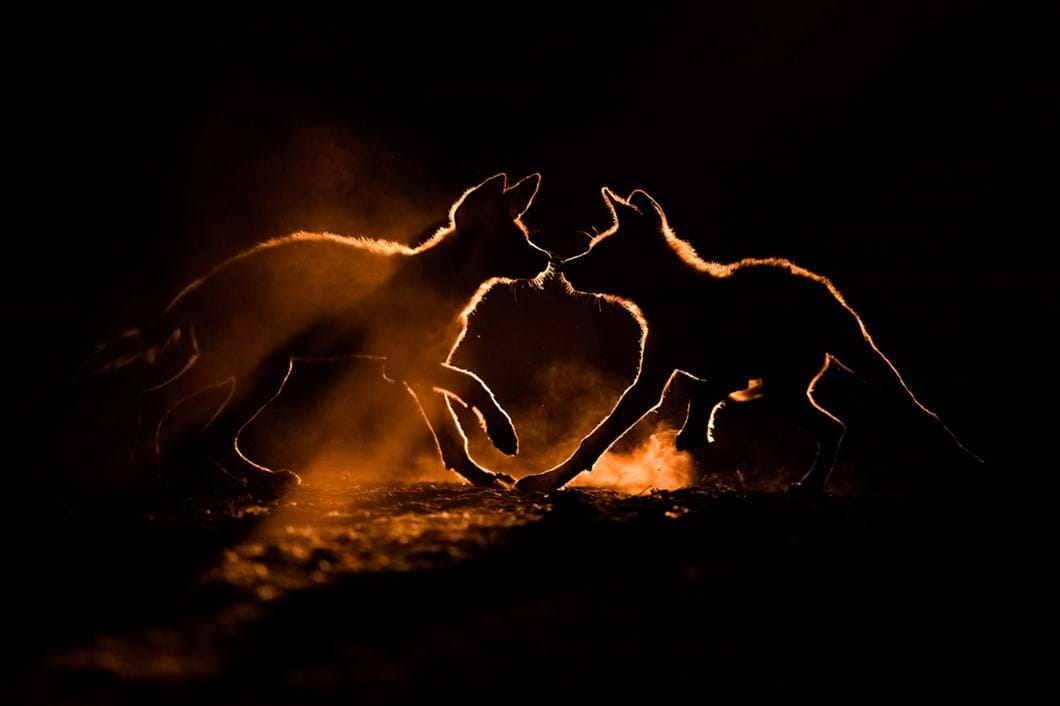 Bence-Mate-wild-dogs_2021-06-05.jpg