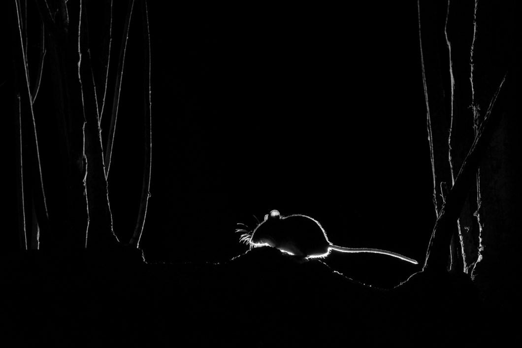 John-Formstone-silhouette-door-mouse_2021-06-05.jpg