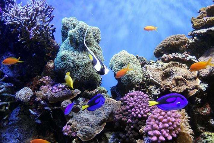 Coral reefs 101: Why do we need them and what's being done to protect them