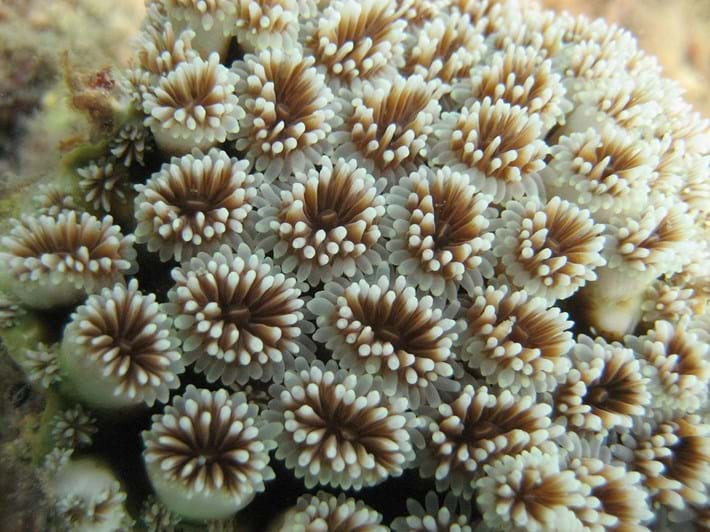 coral-polyps_2021-06-08.jpg