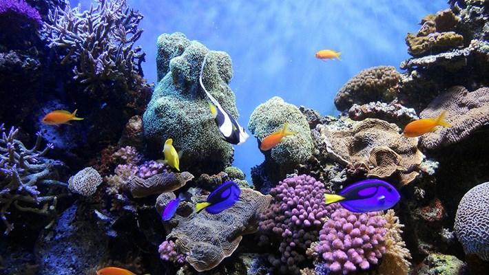 coral-reef_2021-06-08.jpg