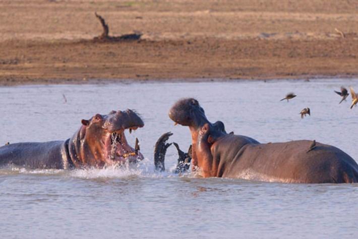Africa's Deadliest – Season 5 – River Rivals
