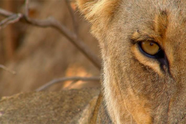 Africa's Deadliest – Season 5