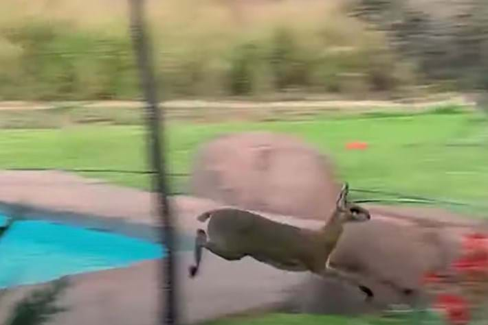 Watch: Playful antelope chases birds (and shows off her parkour skills)