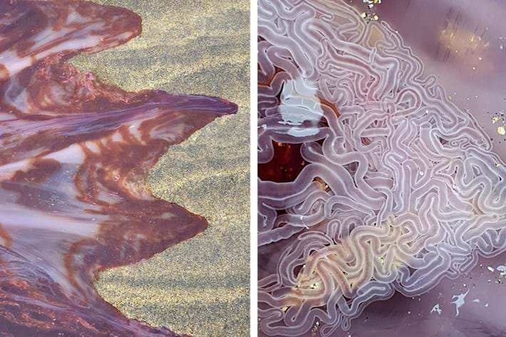 Amazing close-up photos show the otherworldly colours and intricate details of a lion's mane jellyfish